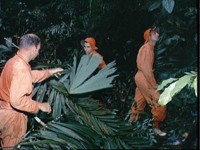 _images/survival-jungle-nasa.jpg